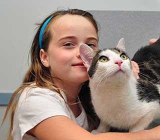 Feline Wellness in Baldwin Animal Hospital, NY