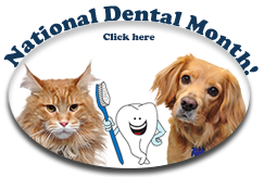 February is National Pet Dental Month