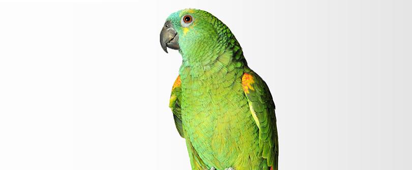 Bird Veterinarian in Baldwin NY