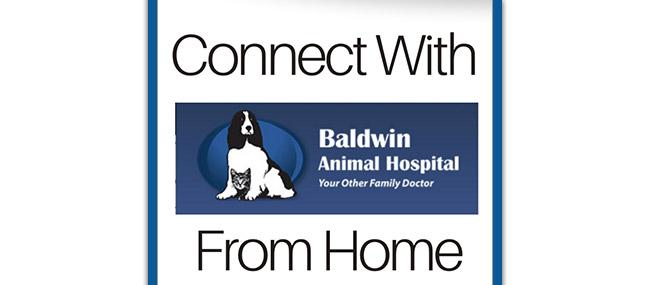 Animal Hospital in Baldwin NY