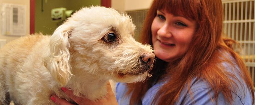 Canine Health Care at Baldwin Animal Hospital, Baldwin, NY