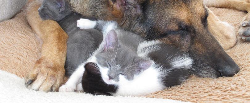 Kitten Care at Baldwin Animal Hospital, Baldwin, NY