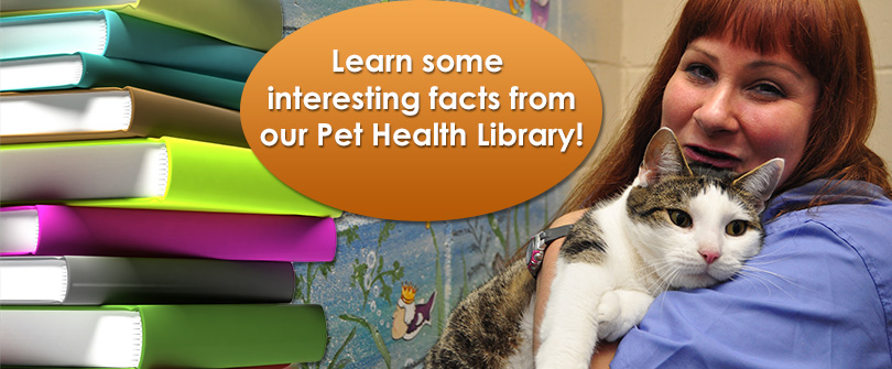 Pet Health Library at Baldwin Animal Hospital, Baldwin, NY