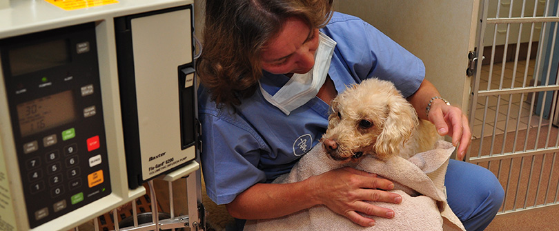 Pet Pain Management at Baldwin Animal Hospital, Baldwin, NY