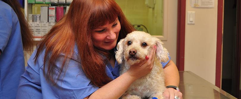Pet Microchipping at Baldwin Animal Hospital, Baldwin, NY