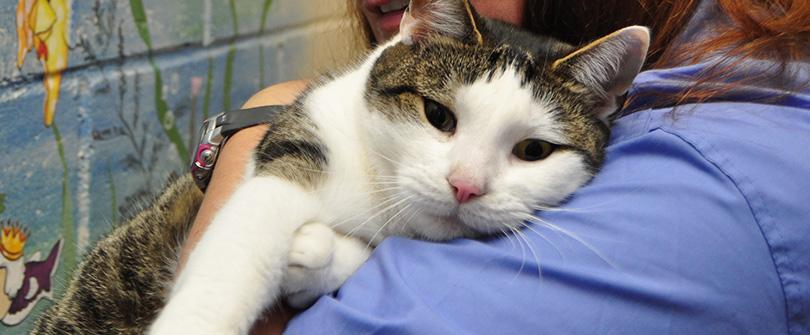 Senior Feline Services at Baldwin Animal Hospital, Baldwin, NY