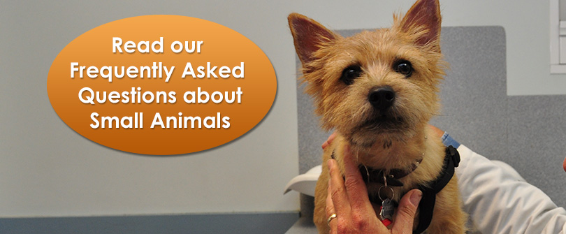 Small Animal Frequently Asked Questions at Baldwin Animal Hospital, Baldwin, NY